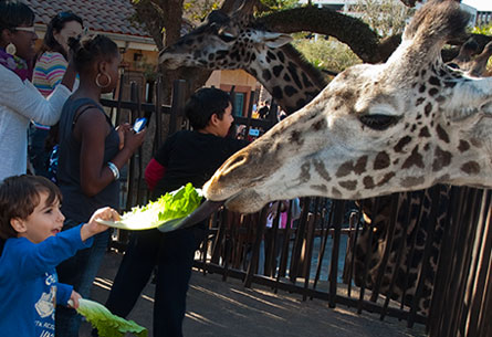 "Zoos That Say, ""Please Feed the Animals!"""