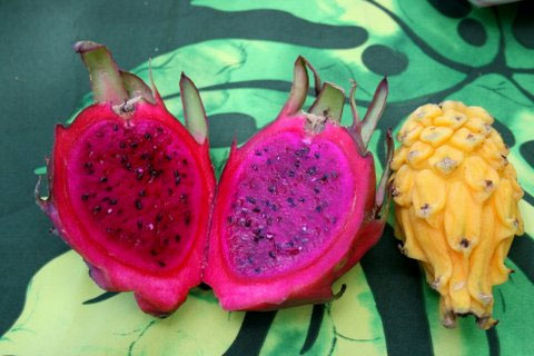 Sampling the Big Island's Bounty – Kohala Grown Farm Tours